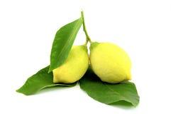 Fresh lemons stock image