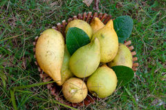 Fresh Lemons In Basket. Fresh Lemon In Bamboo Basket Royalty Free Stock Photography
