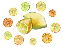 Fresh lemons cut in half and slices isolated on white background. Tropical fruit in cross section. Watercolor painting. Hand painted illustration stock illustration