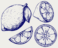 Fresh lemons. Doodle style Royalty Free Stock Image