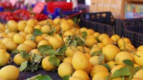 Fresh lemons at farmer market in France, Europe. Italian lemon. Street French market at Nice. Fresh food by local farmers. Fresh vegetables and fruit Stock Photography