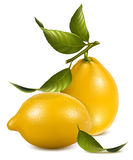 Fresh lemons with leaves. Royalty Free Stock Photography