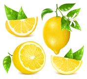Fresh lemons with leaves and blossom. vector illustration