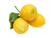 Fresh lemons with leaves Stock Image