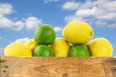 Fresh lemons and lime fruit Royalty Free Stock Photography