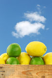 Fresh lemons and lime fruit Stock Images