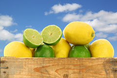 Fresh lemons and lime fruits and some cut ones Stock Photos