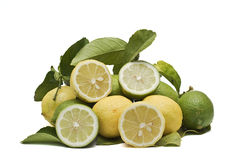 Fresh lemons and limes. Some lemons on the branch and some cut Royalty Free Stock Images