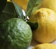 Fresh lemons and limes food photography Stock Photography
