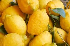 Fresh lemons royalty free stock photography