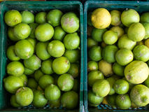 Fresh Lemons in Plastic Crates Stock Images