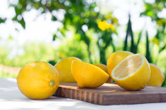 Fresh lemons. Selective focus. Stock Image