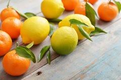 Fresh lemons and tangerines Stock Image