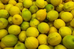 Fresh lemons with yellow and green peel, unclean, food background of the lemons. Fresh lemons with yellow and green peel, unclean, food background of lemons Royalty Free Stock Image