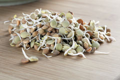 Fresh Lentil Sprouts Stock Photos