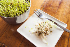 Fresh Lentil Sprouts Stock Images