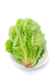 Fresh lettuce Royalty Free Stock Photography