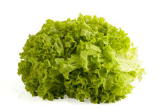 Fresh lettuce Royalty Free Stock Image