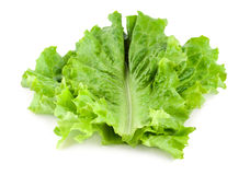 Fresh Lettuce Stock Image