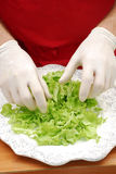 Fresh lettuce. Royalty Free Stock Photos