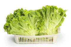 Fresh lettuce Royalty Free Stock Photos