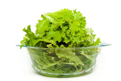 Fresh  lettuce. Fresh green lettuce in a glass bowl on a white background Stock Images