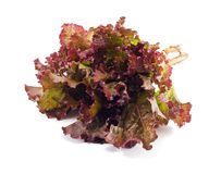 Fresh Lettuce. Red bundle of lettuce isolated on a white background Stock Image