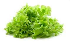 Fresh lettuce. Isolated fresh lettuce on white background royalty free stock image