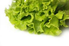 Fresh lettuce. Isolated on white background Royalty Free Stock Photo