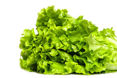 Fresh lettuce. Fresh green lettuce isolated on white Royalty Free Stock Photos