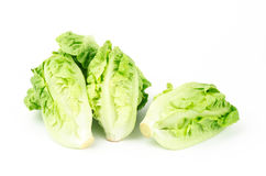 Fresh lettuce (baby cos) Stock Photo