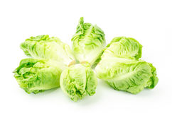 Fresh lettuce (baby cos) Royalty Free Stock Photo