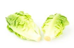 Fresh lettuce (baby cos) Royalty Free Stock Photos