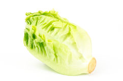 Fresh lettuce (baby cos) Royalty Free Stock Image