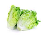 Fresh lettuce (baby cos) Stock Images