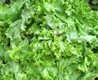 Fresh lettuce background Royalty Free Stock Photos