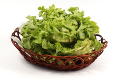 Fresh the lettuce in basket Stock Photography