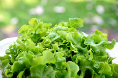 Fresh lettuce in a bowl Royalty Free Stock Photos