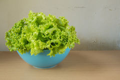 Fresh lettuce in a bowl Royalty Free Stock Images