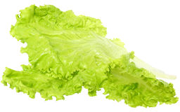 Fresh lettuce close up Royalty Free Stock Photography