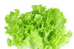 Free Fresh Lettuce Closeup Royalty Free Stock Image - 48616826