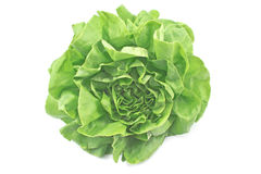 Fresh lettuce Stock Image