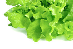 Fresh lettuce isolated on white background Royalty Free Stock Photo