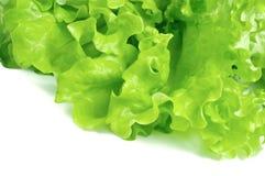 Fresh lettuce isolated on white background Stock Photos
