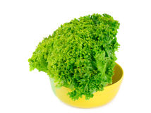 Fresh lettuce. Stock Photo
