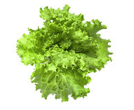 Fresh lettuce isolated on white background Stock Photography