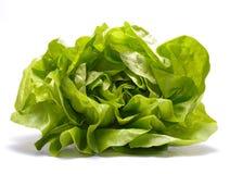 Fresh lettuce isolated on white background Stock Image