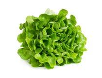 Fresh lettuce isolated on white Stock Image
