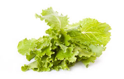 Fresh lettuce leaves across white Stock Photos