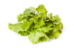 Fresh lettuce leaves across white Stock Photography